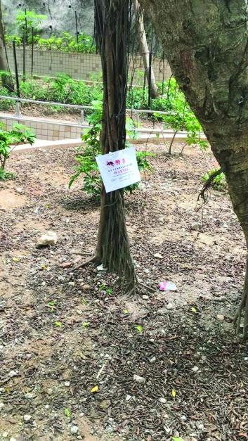 ▲石硤尾邨的綠化帶已放下老鼠藥